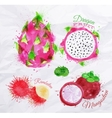 Exotic fruit watercolor dragon fruit rambutan vector image