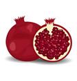 juicy pomegranate isolated on white flat style vector image