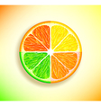 lemon orange lime and grapefruit vector image vector image