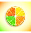lemon orange lime and grapefruit vector image