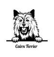 peeking dog - cairn terrier breed - head isolated vector image vector image
