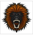 Gorilla head isolated vector image