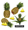 set with hand-drawn pineapple vector image