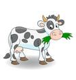 cute cartoon cow eating grass vector image