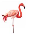 Flamingo bird isolated on white vector image vector image