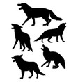 fox mammal animal silhouette vector image