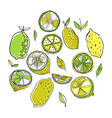 lemons color of fruits doodle vector image