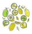 lemons color of fruits doodle vector image