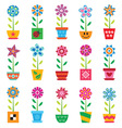 Colorful flowers in pots vector image vector image