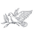 dove or pigeon flying with olive branch in claws vector image vector image