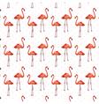 Flamingo birds pattern vector image
