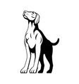german shorthaired pointer dog medium to large vector image