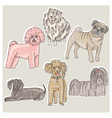 Set of cute little breed dogs vector image