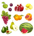flat icons of tropical exotic fruits vector image