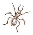 ant insect top view hand drawn sketch vector image vector image