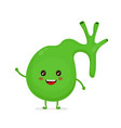 strong healthy happy gallbladder character vector image vector image