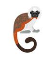 tamarin monkey character vector image vector image