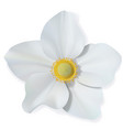 white narcissus flower isolated on white vector image vector image