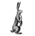 wild hare or brown rabbit stands on its hind legs vector image