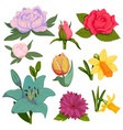 beautiful watercolor handmade flower vector image vector image