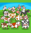 cartoon cows farm animals group vector image vector image