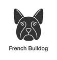 french bulldog glyph icon vector image
