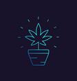 marijuana plant in pot linear icon vector image