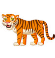 cartoon tiger isolated on white background vector image vector image
