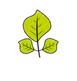 Natural leaves botany of tropical plant vector image