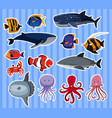 sticker design with many sea animals vector image