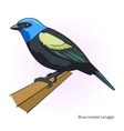 Blue necked tanager bird educational game vector image vector image