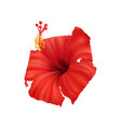 hibiscus flower vector image vector image
