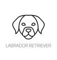 labrador linear face icon isolated outline dog vector image