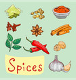spices seasoning hand drawn style food herbs vector image vector image