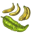 two single and bunches fresh banana with leaf vector image