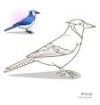 blue jay bird coloring book vector image vector image