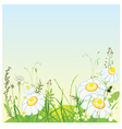 Green landscape flowers and grass meadow