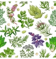 green pattern with herbs on white vector image vector image