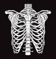 hand drawn line art human ribcage vector image vector image
