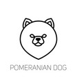 pomeranian spitz linear face icon isolated vector image vector image