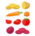 potato beet carrot tomato flat style vector image