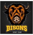 Buffalo head with horns Logo for any sport team vector image