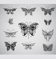 butterflies graphic vector image