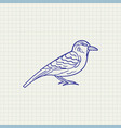 simple drawing sparrow vector image vector image