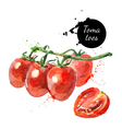 Watercolor datterino tomatoes Isolated eco food on vector image vector image