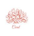 coral sea vector image