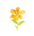 lily flower floral icon realistic cartoon cute vector image vector image