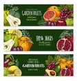 sketch banners of tropical exotic fruits vector image vector image