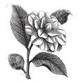 winter rose vintage engraving vector image