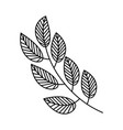 branch leaves linear on white background vector image